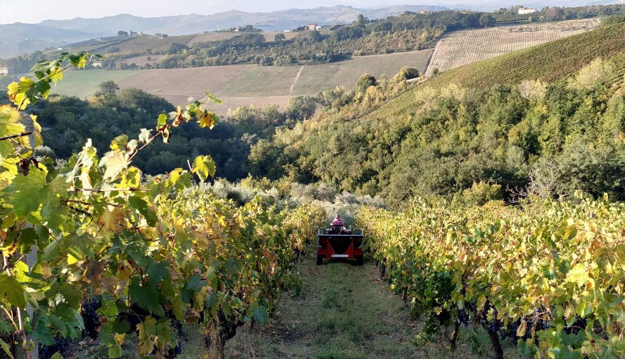 Agricola Lanciani | Al lavoro sul terreno